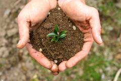 Gardener holding soil -- photo: Alicia Jo McMahan