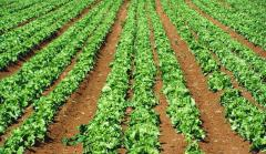 Plant breeding for organic agriculture